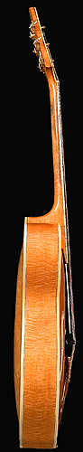 Bass side of D'Angelico guitar